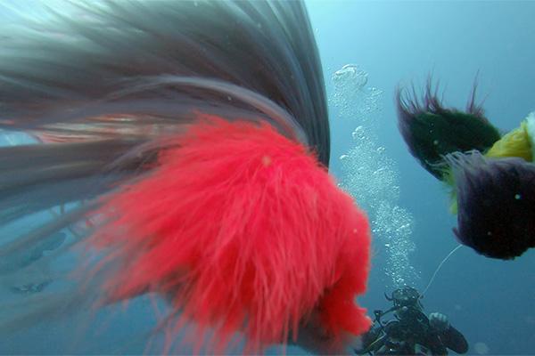 Projekt 97: Furrious: Underwater